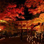 紅葉ライトアップ(室生寺)