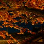 紅葉ライトアップ・献灯祭(等彌神社)