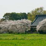 興福寺(橿原市)